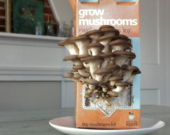 Grow Your Own Mushrooms ++ the pear and plum